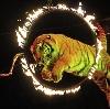 Цирки в Ивантеевке