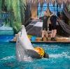 Дельфинарии, океанариумы в Ивантеевке